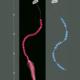 Extensiones Shinning H. S. Pluma Clip
